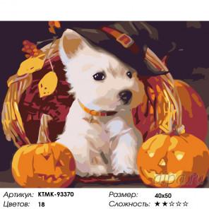 Щенок с тыквами Раскраска картина по номерам на холсте KTMK-93370
