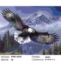 Парящий орлан Раскраска картина по номерам на холсте