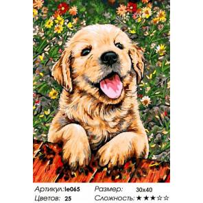Количество цветов и сложность Игривый щенок Алмазная мозаика на подрамнике LE065