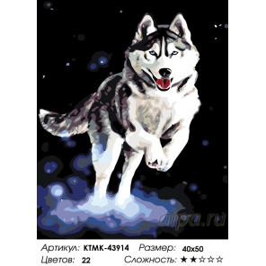 Количество цветов и сложность Северный пес Раскраска картина по номерам на холсте KTMK-43914