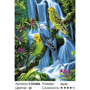 Количество цветов и сложность Волнистые попугаи Раскраска картина по номерам на холсте Z-EX5286