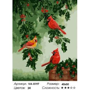 1 Кардиналы на падубе Раскраска картина по номерам на холсте