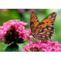 Бабочка на цветке Канва с рисунком для вышивки бисером