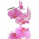 Орхидеи Канва с рисунком для вышивки бисером