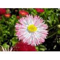 Майский цветок Канва с рисунком для вышивки бисером