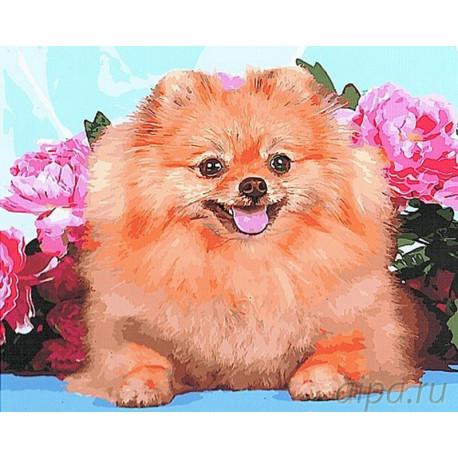 GX27103 Шпиц в розах Раскраска картина по номерам на ...