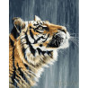 Тигр под дождем Раскраска картина по номерам на холсте GX27384