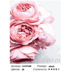 Количество цветов и сложность Роза садовая Раскраска картина по номерам на холсте GX27648