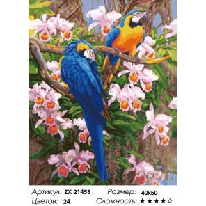 Яркие попугаи Раскраска картина по номерам на холсте ZX 21453