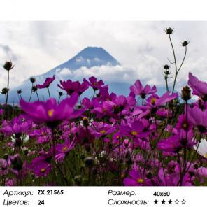 Количество цветов и сложность Космеи Раскраска картина по номерам на холсте ZX 21565