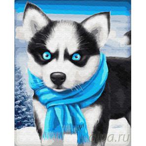 Голубоглазый щенок хаски Раскраска картина по номерам на холсте Z-GX23297