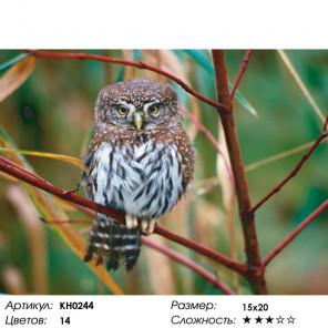 Совенок Раскраска по номерам на холсте Molly KH0244