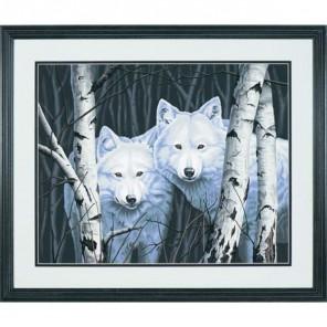 Два белых волка между берез Раскраска (картина) по номерам Dimensions