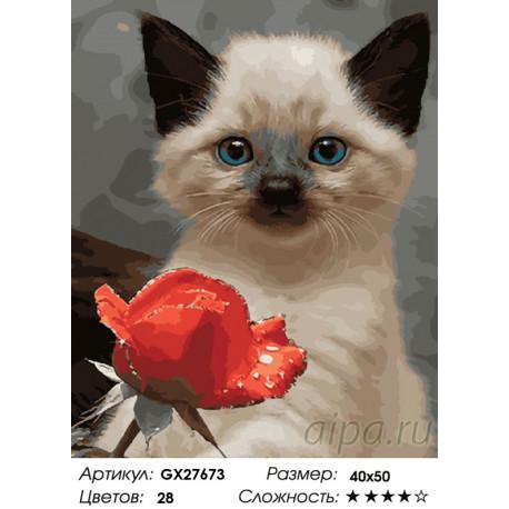 Количество цветов и сложность Сиамский котенок Раскраска картина по номерам на холсте GX27673