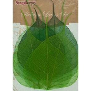 Зеленые Листочки скелетированные из бананового дерева Украшение для скрапбукинга, кардмейкинга Scrapberry's