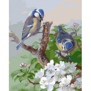 Синички на ветке сакуры Раскраска картина по номерам на холсте