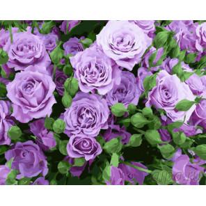 Сиреневые розы Раскраска картина по номерам на холсте