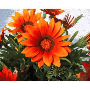Оранжевые цветы Раскраска картина по номерам на холсте