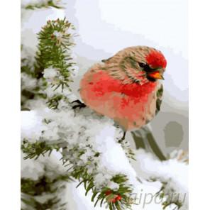 Снегирь на ветке Раскраска картина по номерам на холсте