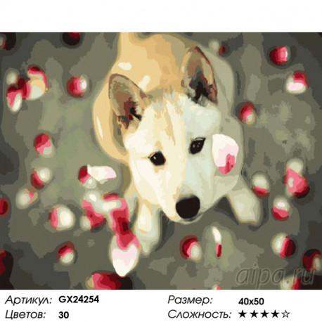 Количество цветов и сложность Собака в лепестках роз Раскраска картина по номерам на холсте GX24254