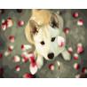 Собака в лепестках роз Раскраска картина по номерам на холсте GX24254