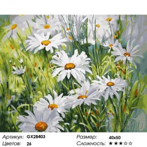 Количество цветов и сложность Ромашковое лето Раскраска картина по номерам на холсте GX28403