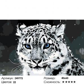 Глубина взгляда Раскраска по номерам на холсте Живопись по номерам Z49772