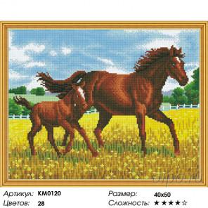 Количество цветов и сложность Прогулка Алмазная мозаика вышивка на подрамнике Molly KM0120