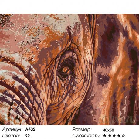 Количество цветов и сложность Мудрый слон Раскраска по номерам на холсте Живопись по номерам A435