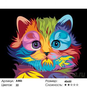 Радужный котенок Раскраска по номерам на холсте Живопись по номерам A443