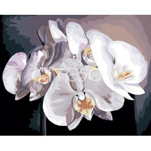 Белые орхидеи Раскраска картина по номерам акриловыми красками на холсте Iteso