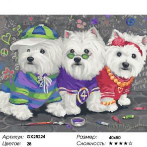 Количество цветов и сложность Гламурное трио Раскраска картина по номерам на холсте GX25224