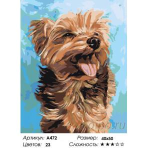 Количество цветов и сложность Радостная собачка Раскраска картина по номерам на холсте A472