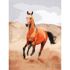 Ахалтекинский скакун Раскраска картина по номерам на холсте