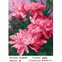 Цветки малиновых пионов Раскраска картина по номерам на холсте