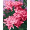 Цветки малиновых пионов Раскраска картина по номерам на холсте ZX 22155