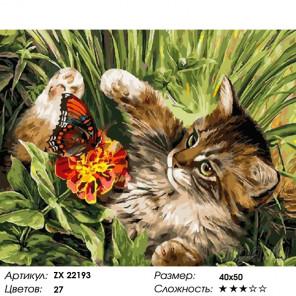 Количество цветов и сложность Кот и бабочка Раскраска картина по номерам на холсте ZX 22193