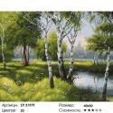 Лесные березки Раскраска картина по номерам на холсте