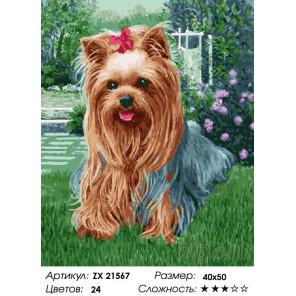 Количество цветов и сложность Милая собачка Раскраска картина по номерам на холсте ZX 21567