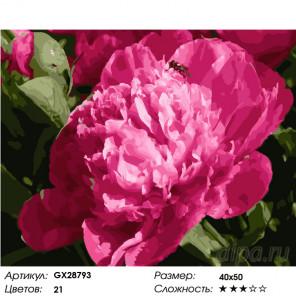 Количество цветов и сложность Пион Раскраска картина по номерам на холсте GX28793