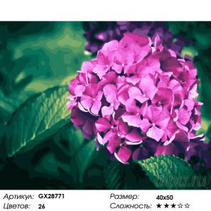 Количество цветов и сложность Нежная гортензия Раскраска картина по номерам на холсте GX28771