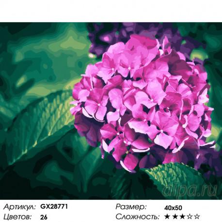 GX28771 Нежная гортензия Раскраска картина по номерам на ...