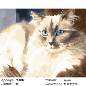 Количество цветов и сложность Пушистый красавец Раскраска картина по номерам на холсте PK30001