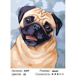 Сложность и количество цветов Веселый мопс Раскраска картина по номерам на холсте A597