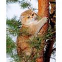 Кот на дереве Алмазная вышивка мозаика Алмазное Хобби