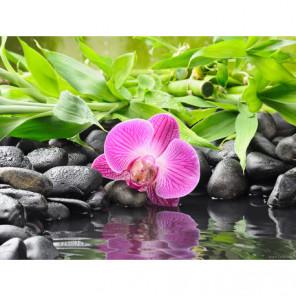 Орхидея на черных камнях Алмазная вышивка мозаика Алмазное Хобби