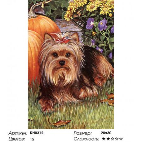 Количество цветов и сложность Йорк Раскраска по номерам на холсте Molly KH0312