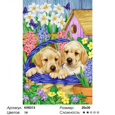 Количество цветов и сложность Щенки лабрадора Раскраска по номерам на холсте Molly KH0313