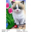 Маленький котенок Раскраска по номерам на холсте Molly