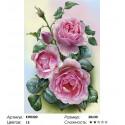 Розовые розы Раскраска по номерам на холсте Molly